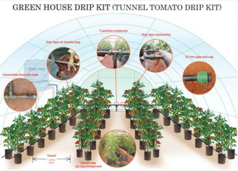 Green House Tomato Drip Kit (With Bags)